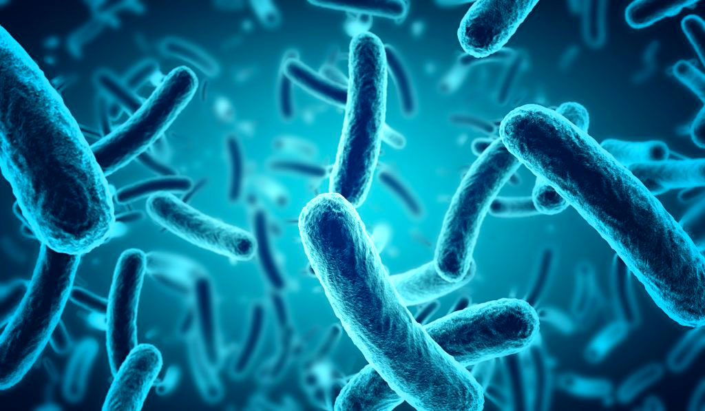 microbiote article